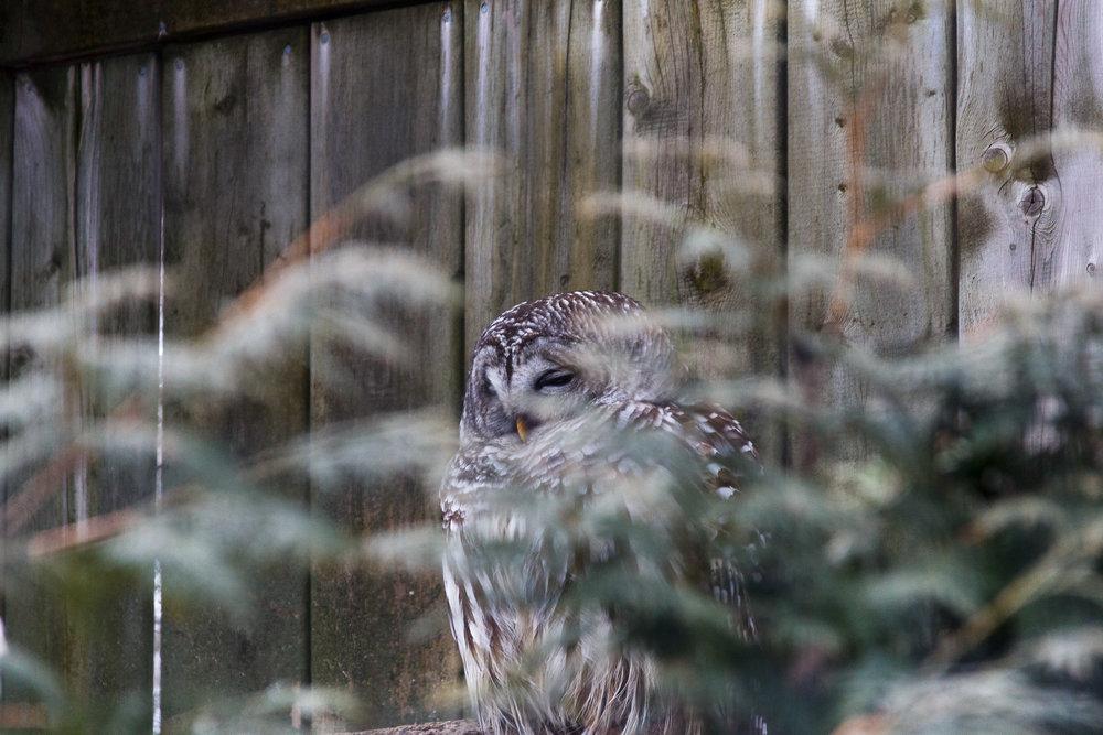 Zoo Ecomuseum-26.jpg
