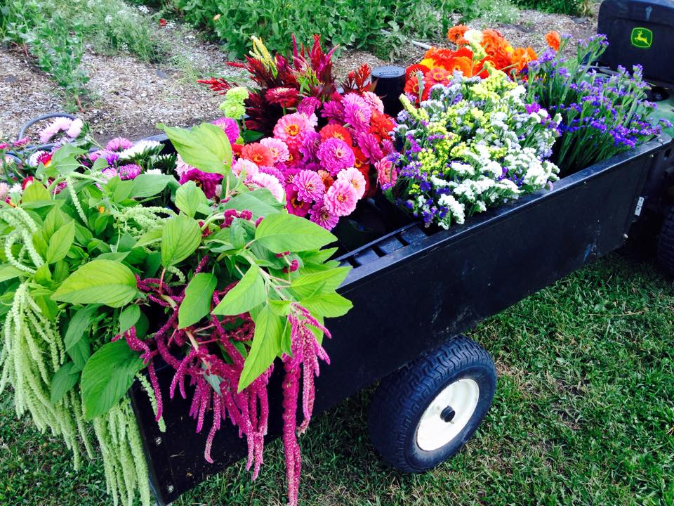 ROOTS FLOWER FARM FB 4.jpg