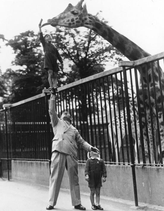 sntclr :     Feeding a Giraffe, 1950