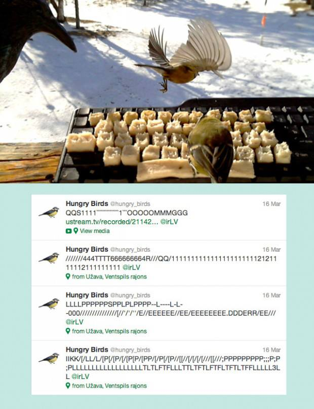 @Hungry_birds   are real birds from Latvia typing on the keyboard made from fat.