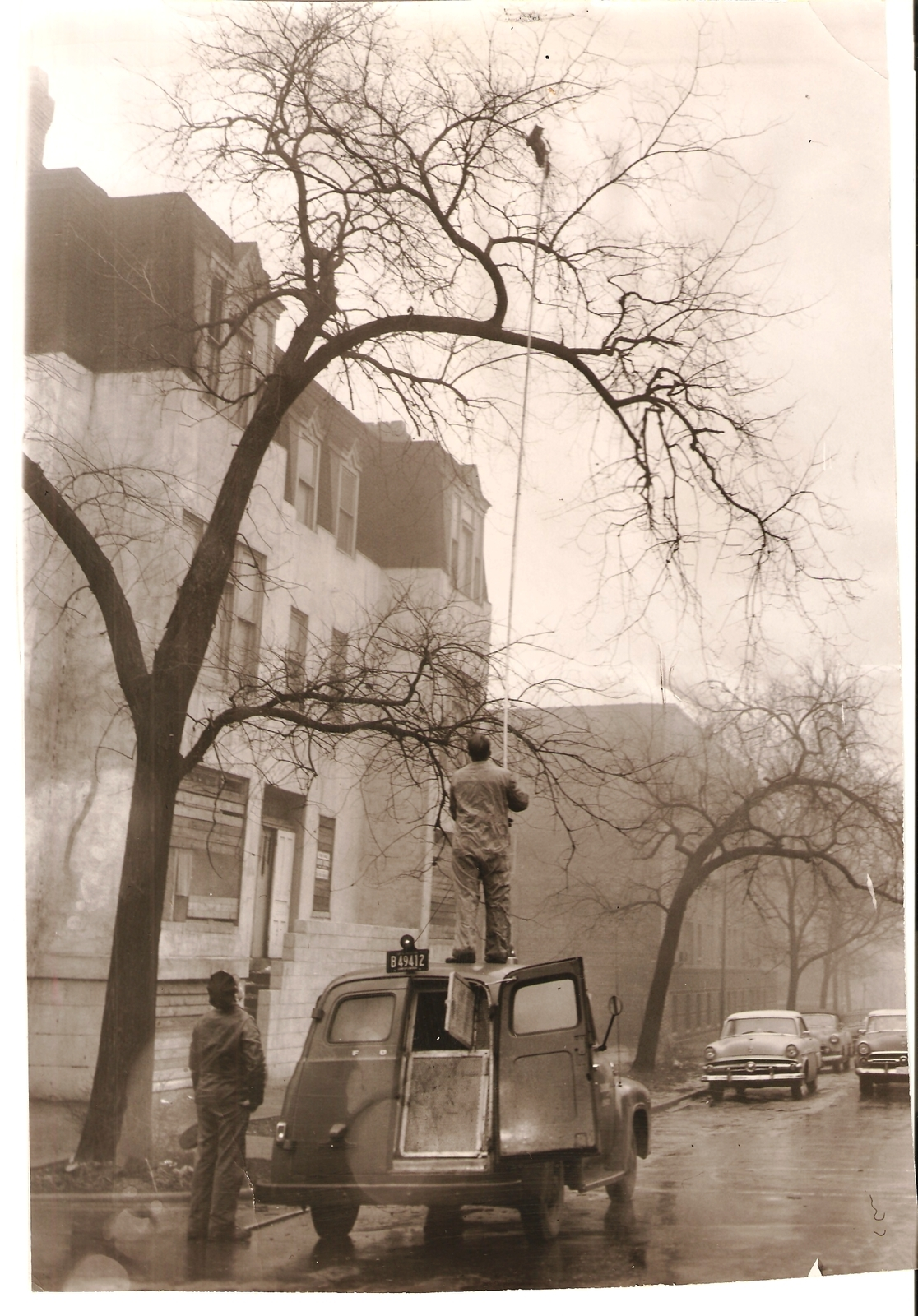 calumet412: Rescuing a cat at Cornelia and Wilton in Lake View, 1959, Chicago