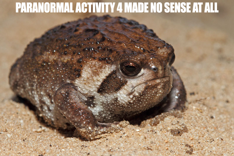 all real thoughts i've had. you get it? the foolishly disappointed sand rain frog™™™™™™ was me the whole time.