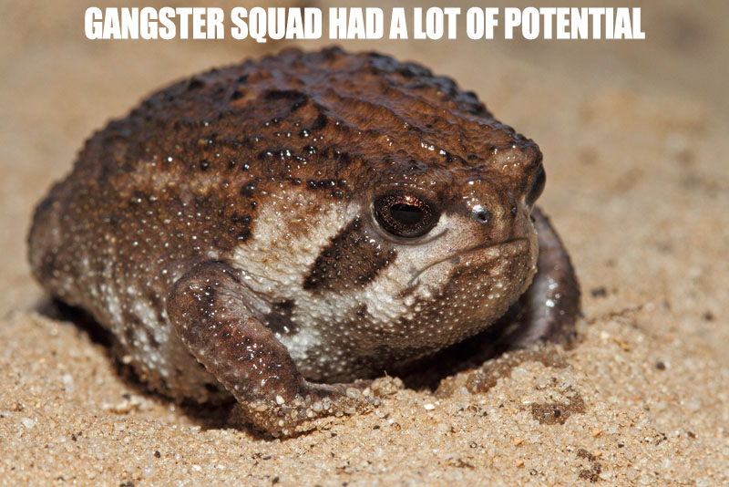 oh, foolishly disappointed sand rain frog™™™™™, when will you ever learn?