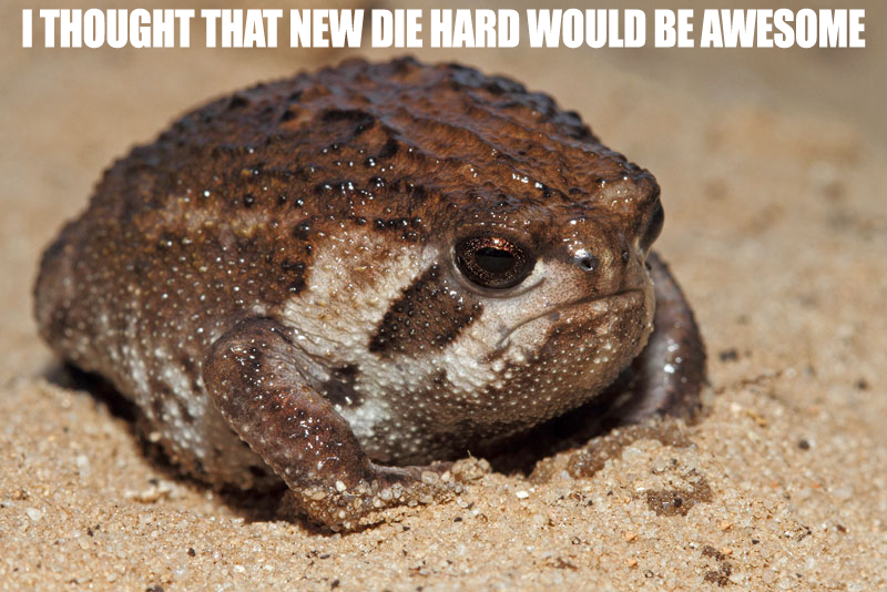 foolishly disappointed sand rain frog™™™™™™™