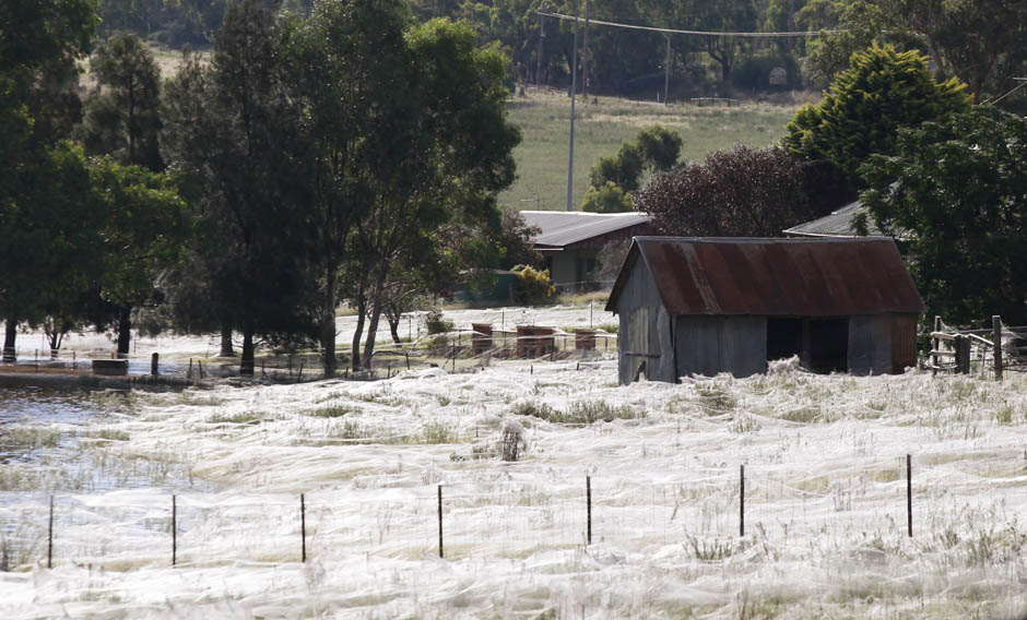A house is surrounded by spiderwebs next to flood waters in Wagga Wagga  March 6, 2012 .
