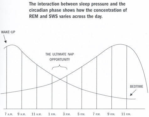 Because I love charts of all kinds, especially ones with labels like THE ULTIMATE NAP OPPORTUNITY.