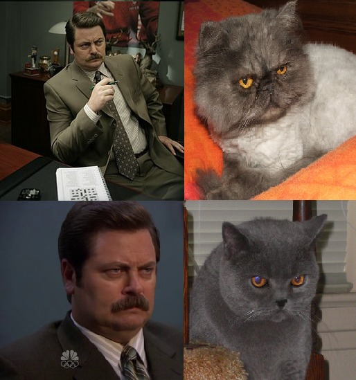 classicvitaminc :     I really feel like i should bring this to the attention of Tumblr again because it did not get the reception i was hoping for when i first posted it a million years ago.   RON SWANSON.   KING AMONG MEN.   ALSO HE LOOKS LIKE A FUCKING CAT.