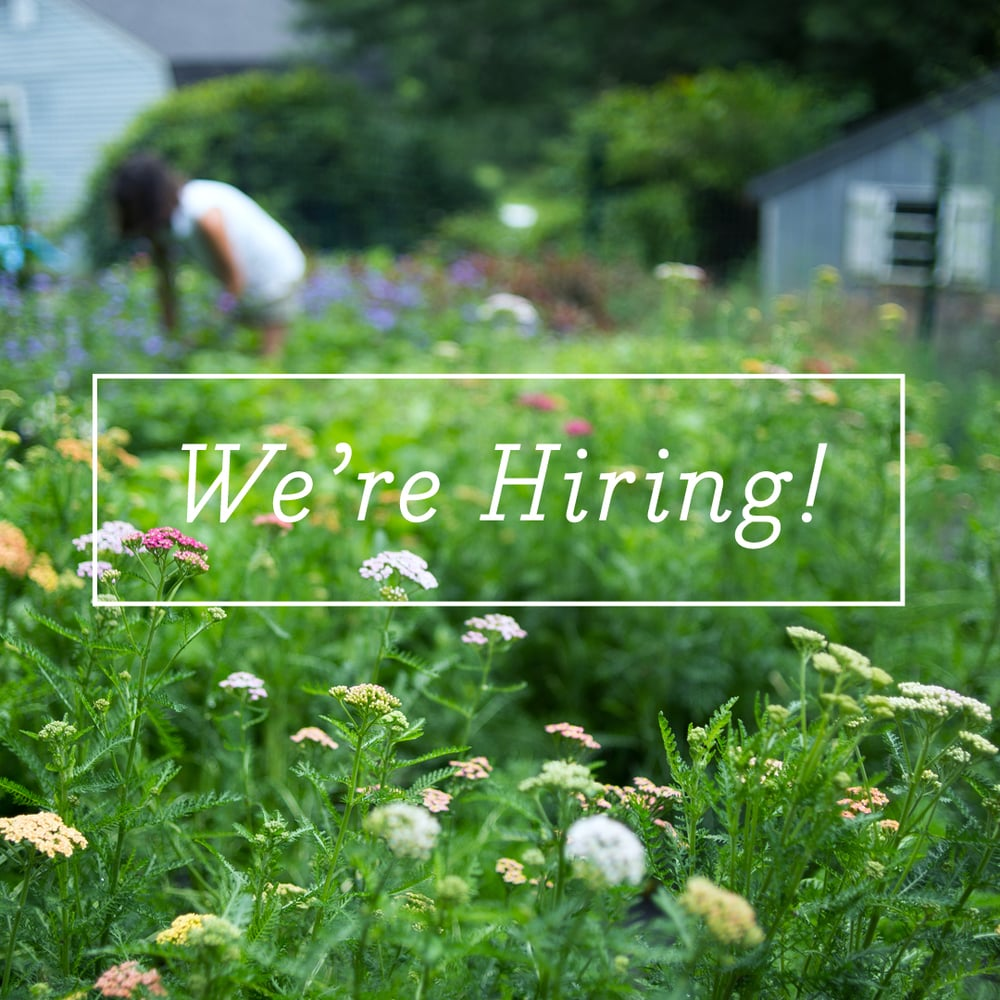 We are hiring for 2 positions in our shop and on our flower farm! Are you a floral designer or gardener? Get in touch for more info -  kira@greenmeadowsflorist.com