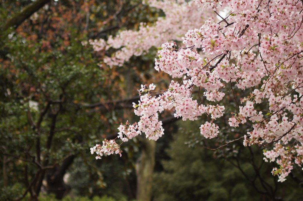 839f7c85f86a Portland Underground Grad School (PUGS) — Decoding Plants - Trees in ...