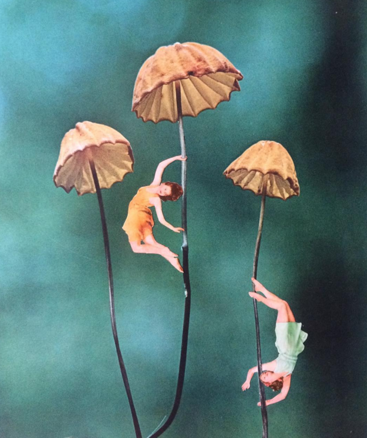 Image by  Janna Dorothy
