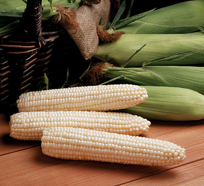 Avalon HQ Corn