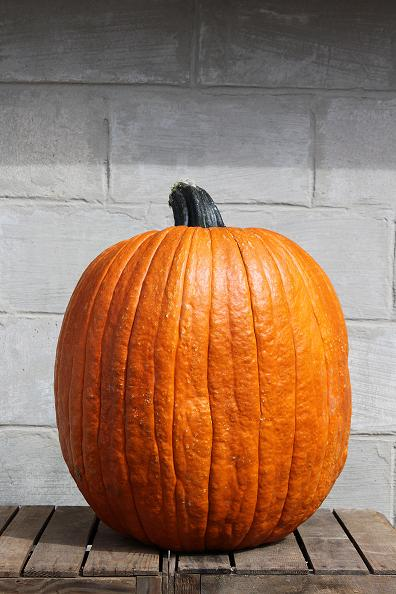 Big Doris Pumpkin