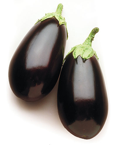 Night Shadow Egg Plant