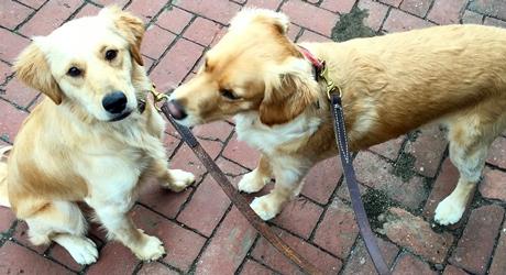 dog-walking-philadelphia.jpg