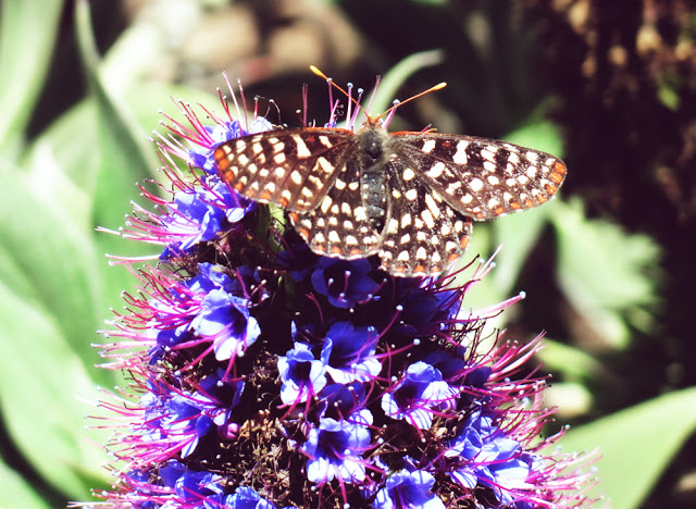 Galia Alena Photography, Esalen, Big Sur, butterfly