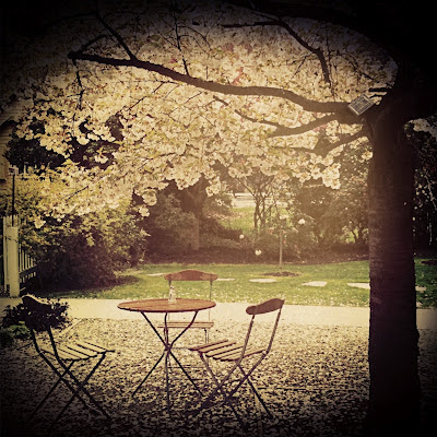 galia alena photography,  blossoms, cafe, Arrowtown