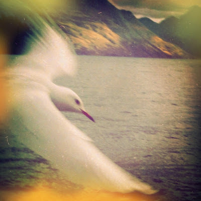 galia alena photography, seagull, Lake Wakitipu, Queenstown