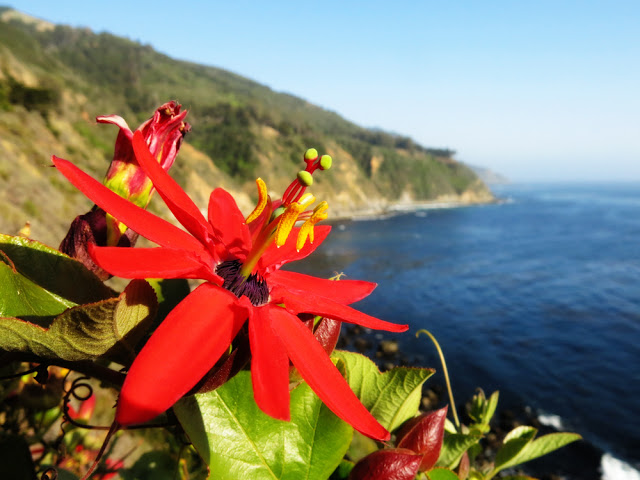Galia Alena Photography, Esalen, Big Sur, Passion Flower