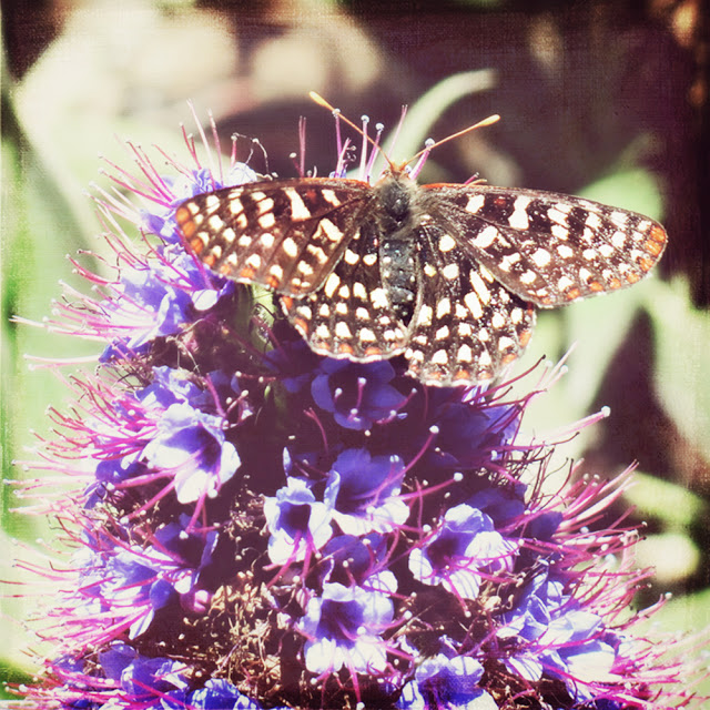 Galia Alena Photography butterfly at Easlen
