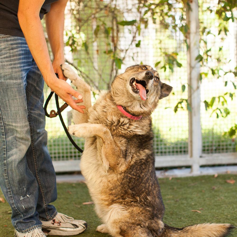 014_animal-photography-cats-dogs-volunteer_MG_4871.jpg