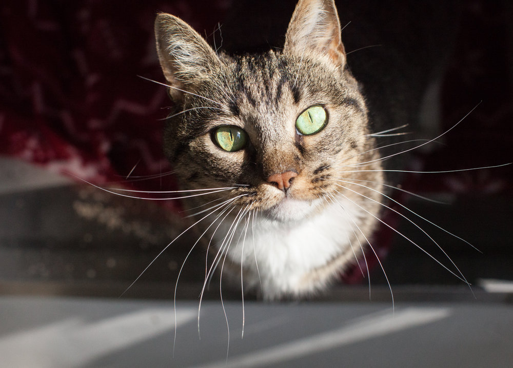 036_animal-photography-cats-dogs-volunteer_MG_9005.jpg