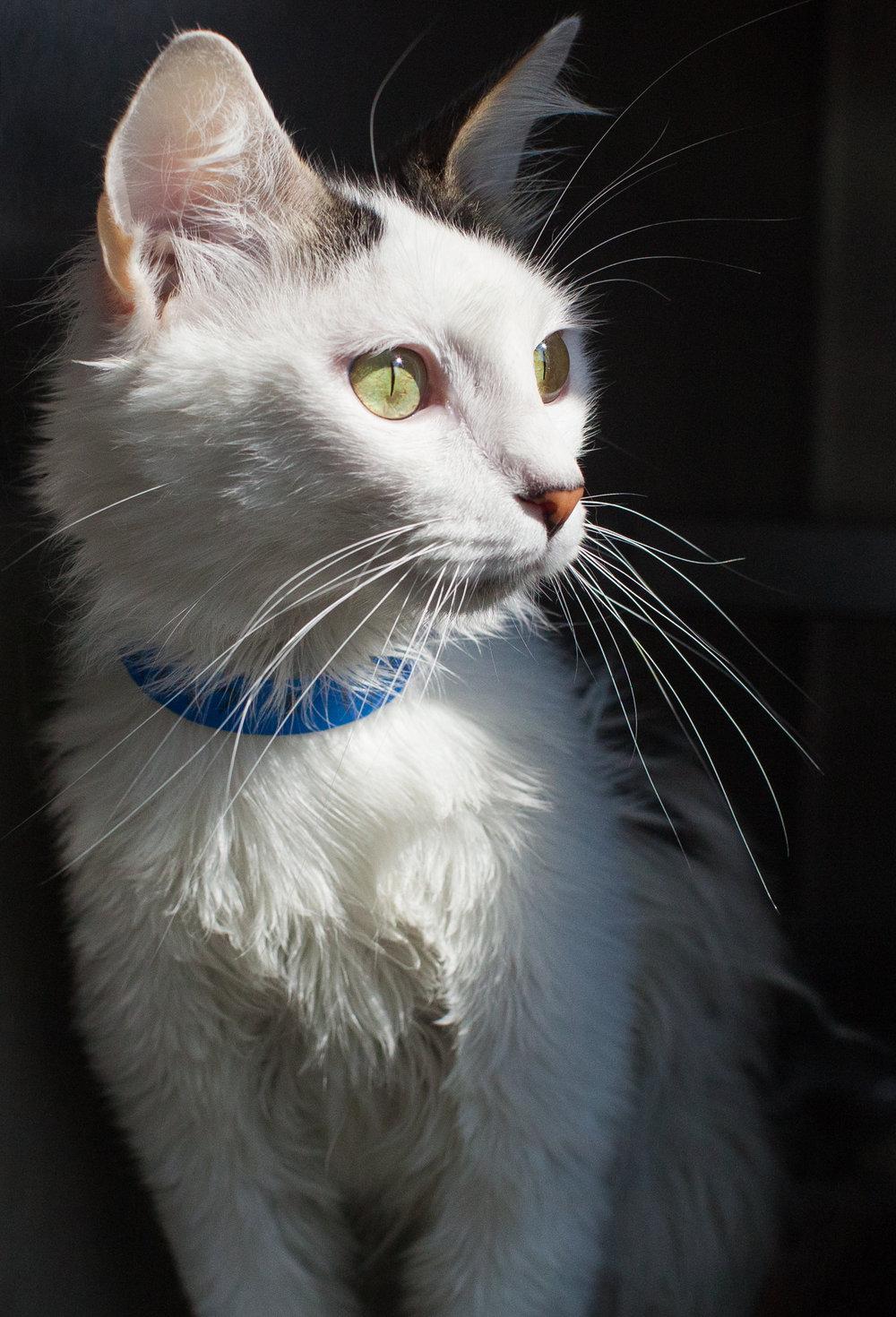 055_animal-photography-cats-dogs-volunteer_MG_8974.jpg