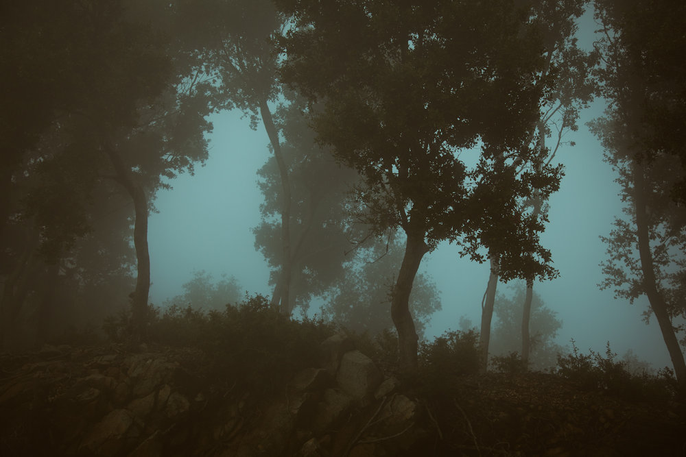 w-Kat-Kaye-landscape-photography-forest.jpg