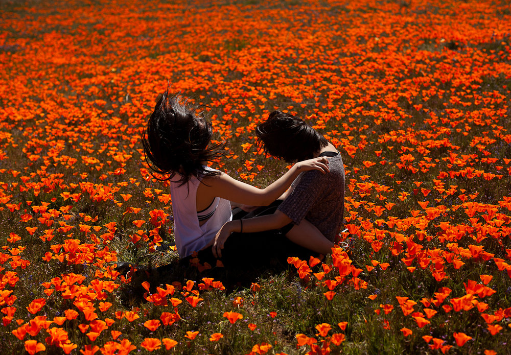 Kat_Kaye-teen-vogue-girl-gaze-girlgaze-field-flowers-poppy-poppies.jpg