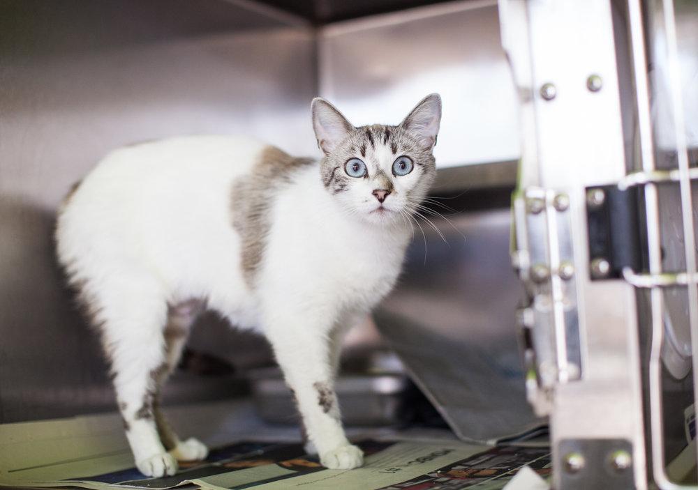 animal-photography-cats-dogs-volunteer_MG_8435.jpg