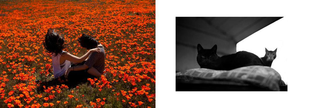 teen-vogue-girl-gaze-girlgaze-kat-kaye-cats-pretty-fashion-photography.jpg