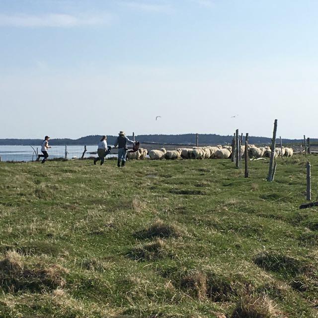 Spring Shearing Roundup