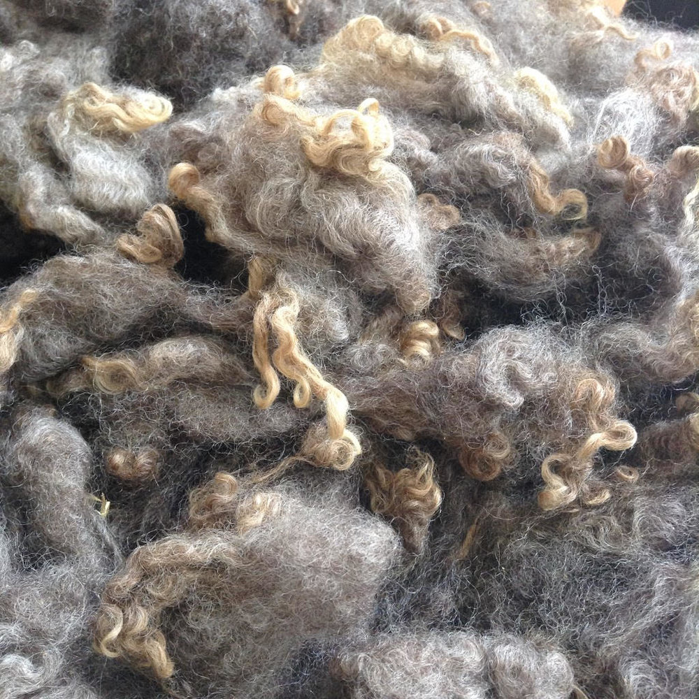 Washed Coopworth Fleece