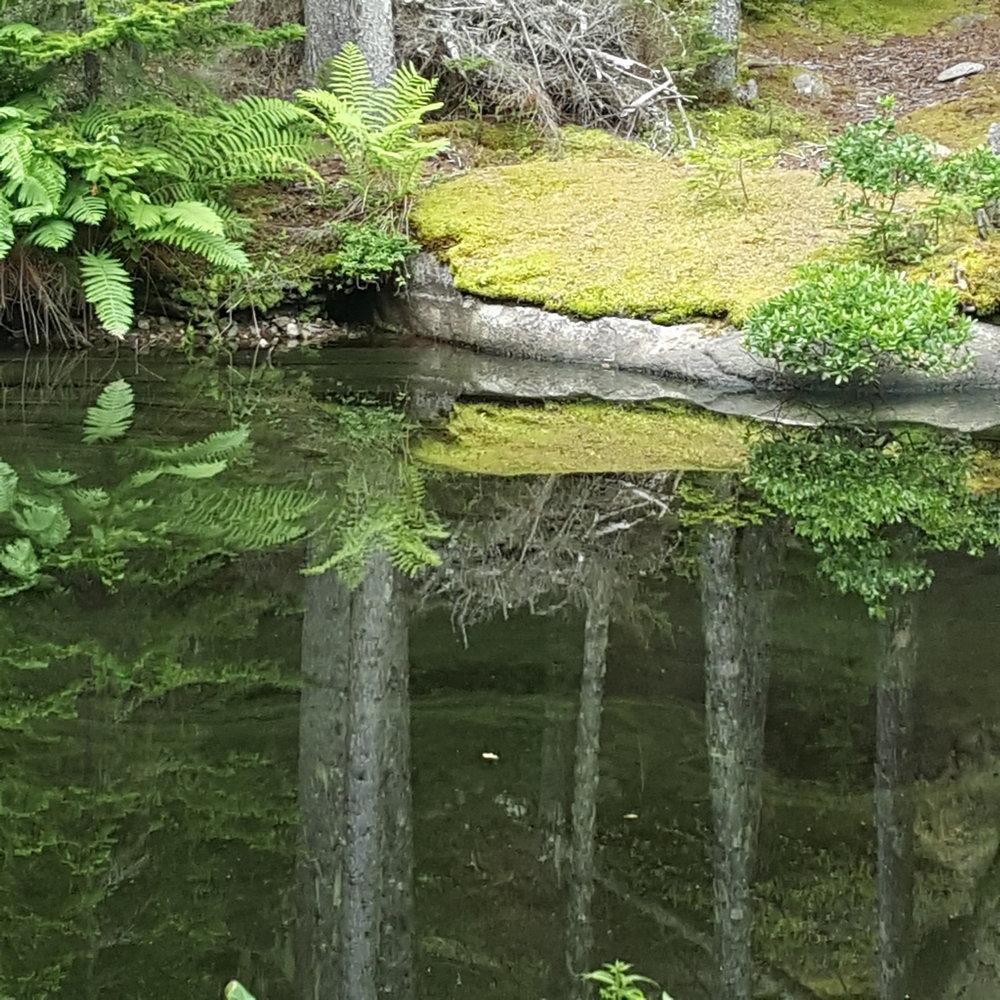 Ice Pond -