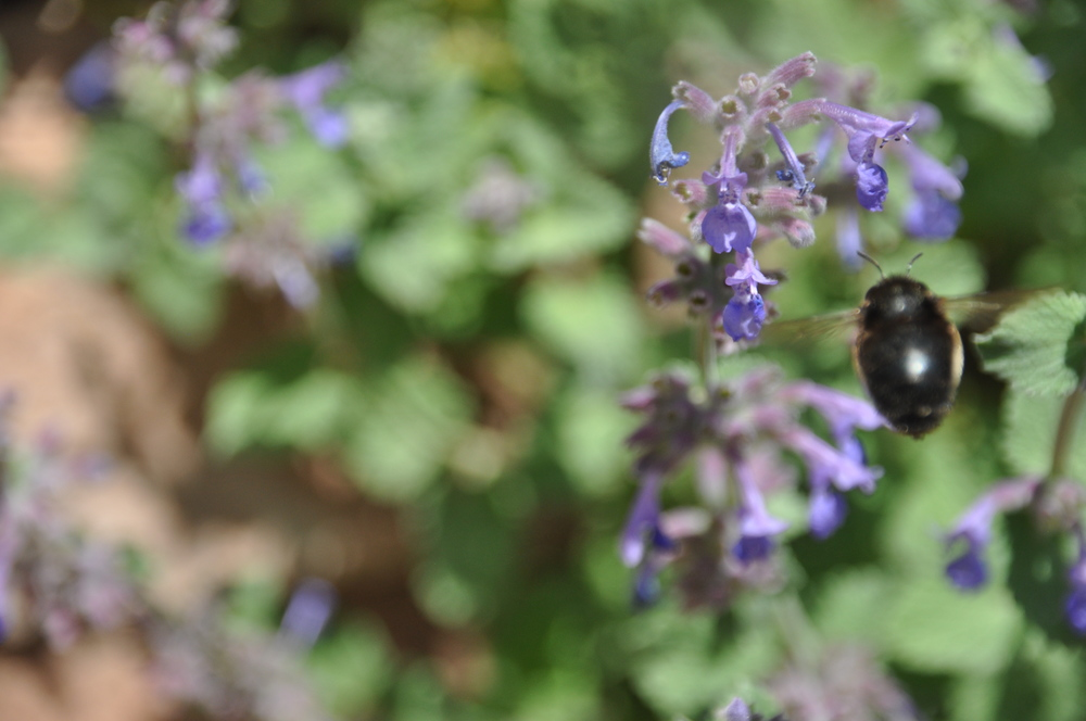 bee back3.JPG