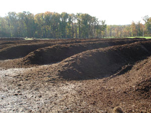 Compost_3.jpg
