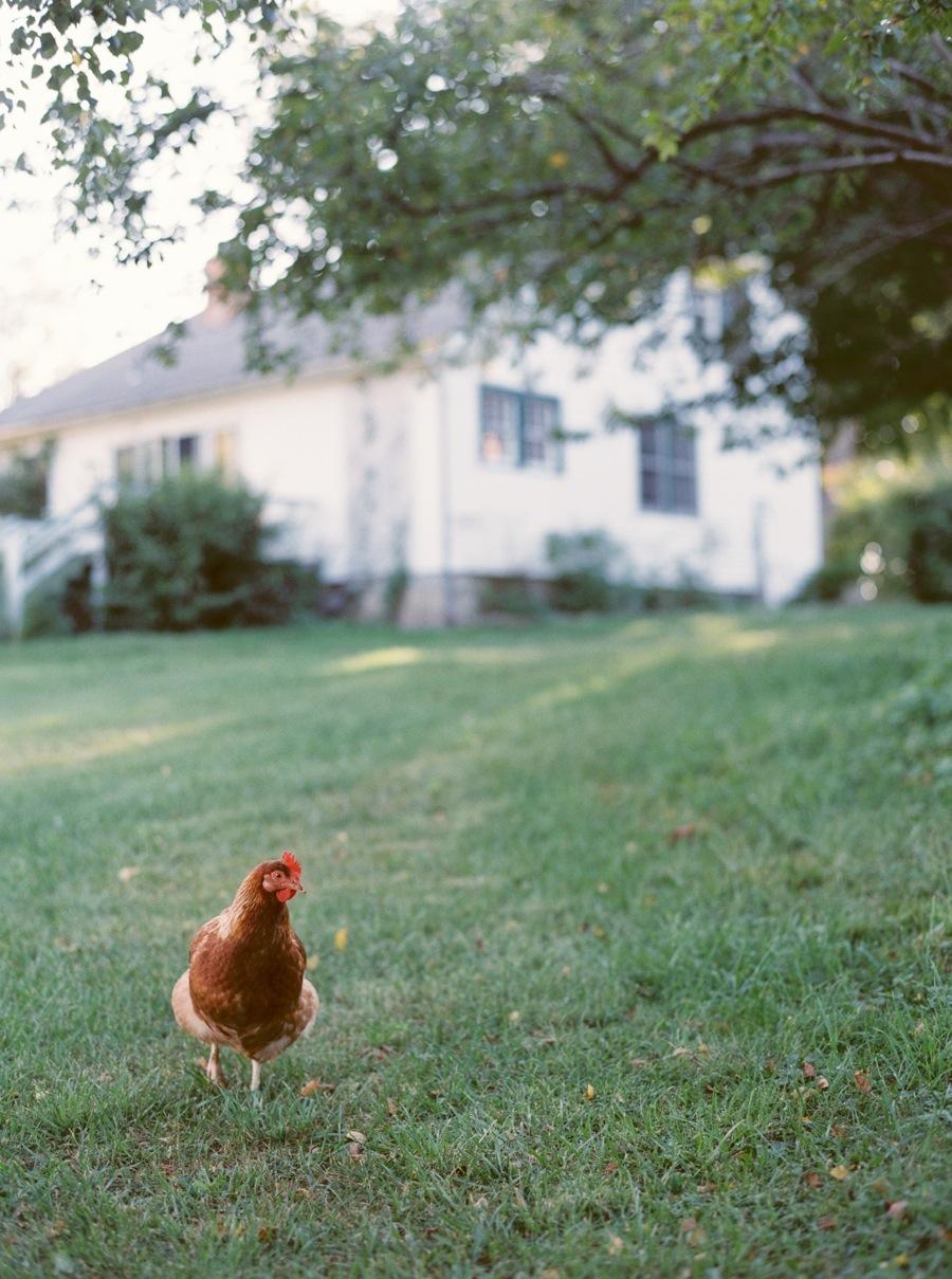 Firendly Chicken