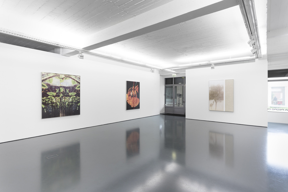 Installation view, Diogo Evangelista, A driver who indicates left and then turns right, Galeria Pedro Cera