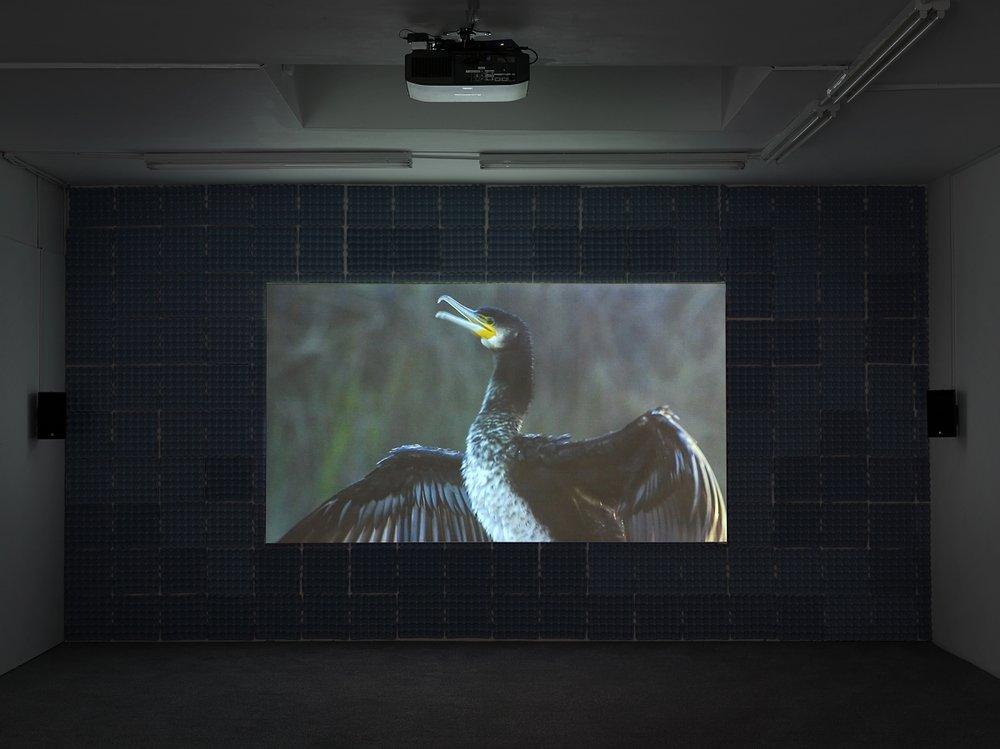 Simon Dybbroe Møller,Cormorous (Film Still),2016
