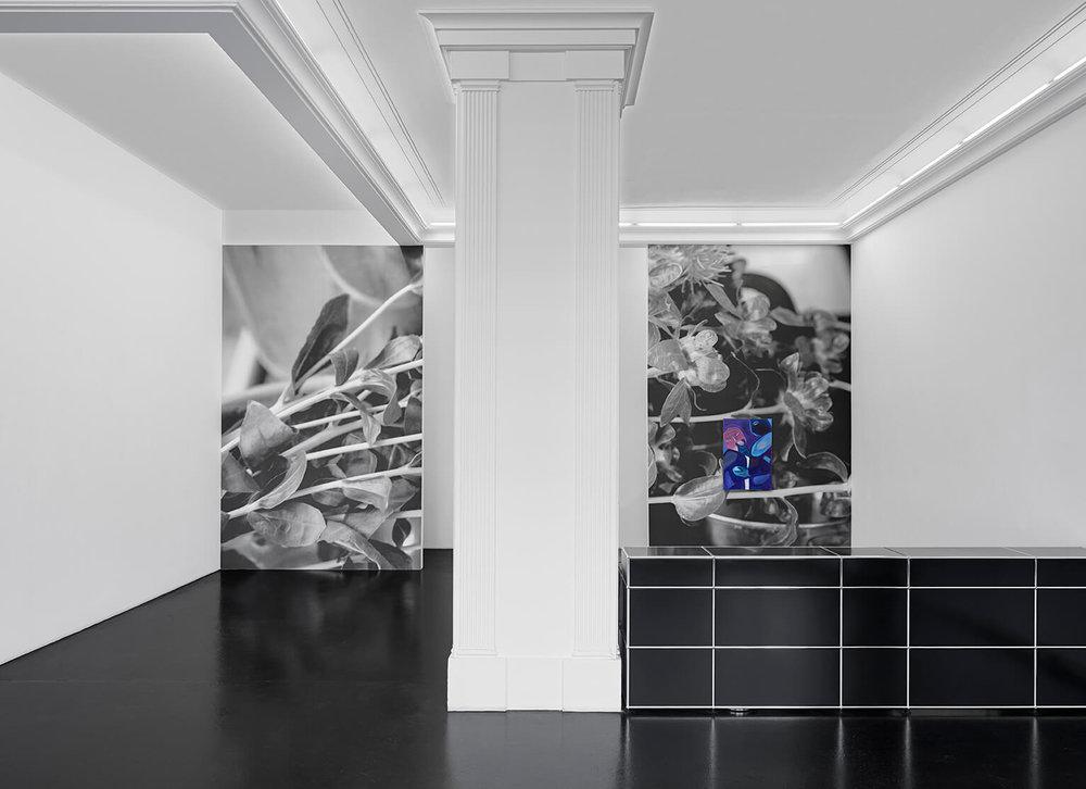 Melike-Kara-Köpek-Installation-View-0-HIRES.jpg