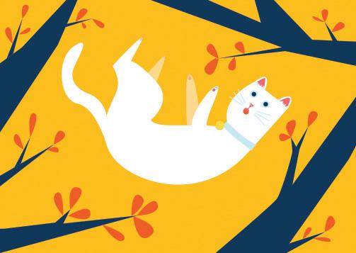 SS-Cat.jpg