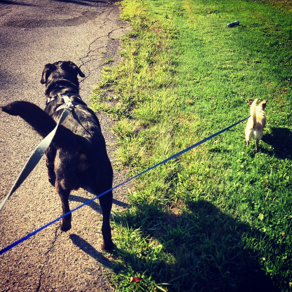 Big dog! Little dog! They love their walks.