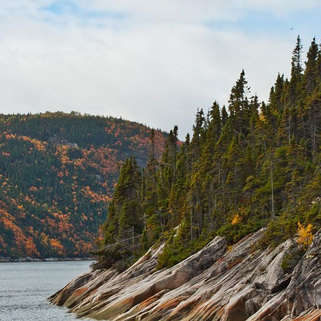 Whale watching fall foliage.  #nikond90 #fall #canada #whalewatching