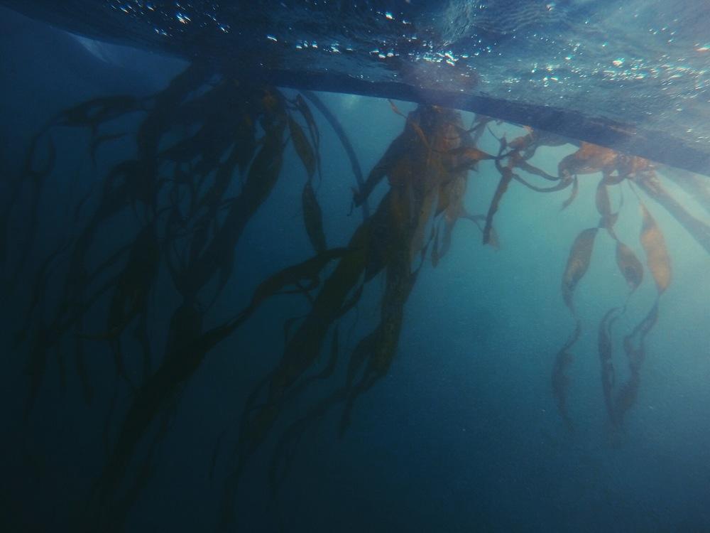 Amelia wachtin underwater