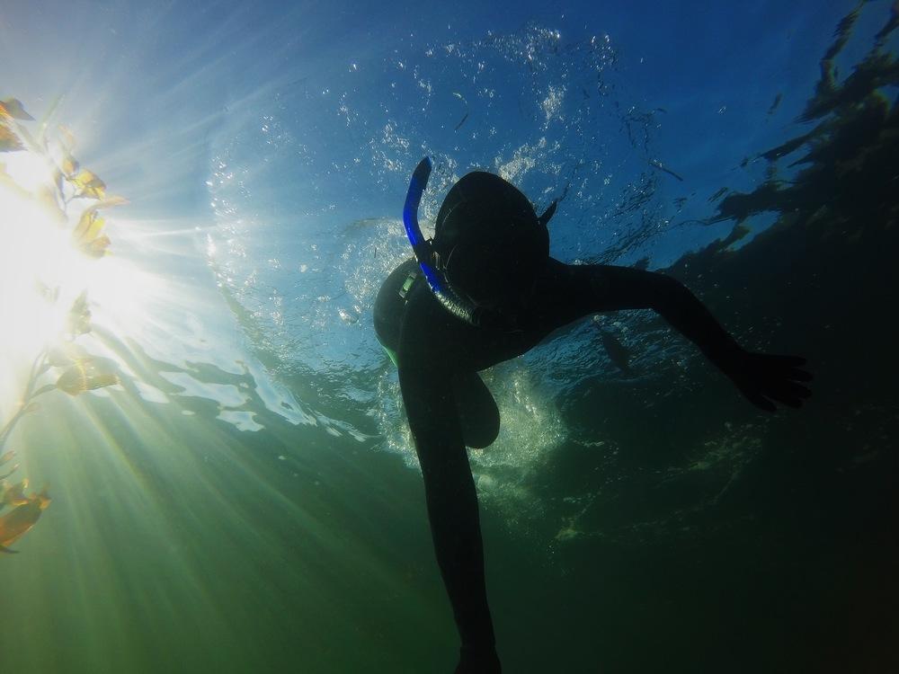 amelia wachtin free dive