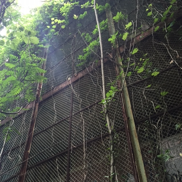 This overgrown adult playground was not so fun for the patients who once lived here.