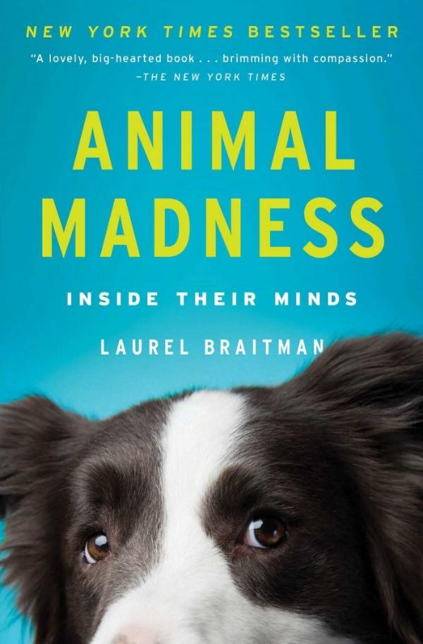 Animal Madness PBack Cover.jpg