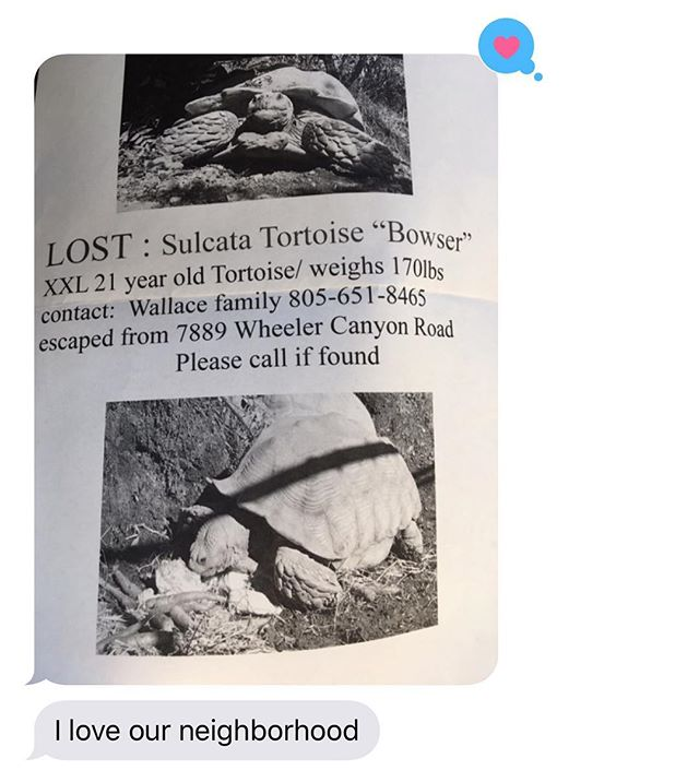 Texts from mom. Also: residents of #santapaula and/or #Ojai (depending on speed of tortoise?) please help this family find their 170 pound Bowser. He's basically a teen at 21 years old...so maybe he just snuck out to party in the avocado/lemon/orange orchards....Here's hoping for his safe return. 🥑🐢🍊