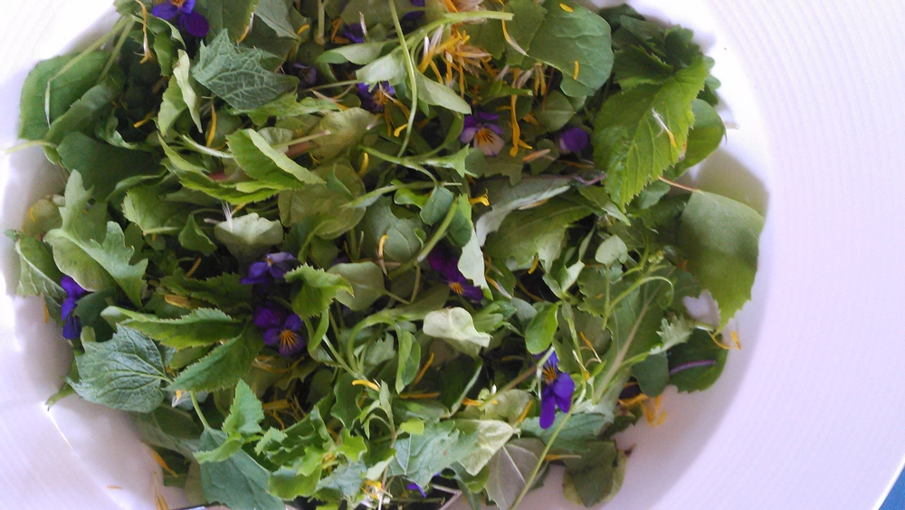 dagens salat
