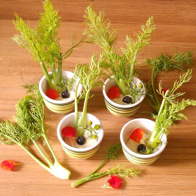 Dagens forrett, mini fennikel med hjemmelaget kefir ferskost smaksatt med tunbalderbrå,løvetann og ryllik spiseligeblomster av blomkarse og et aronia bær
