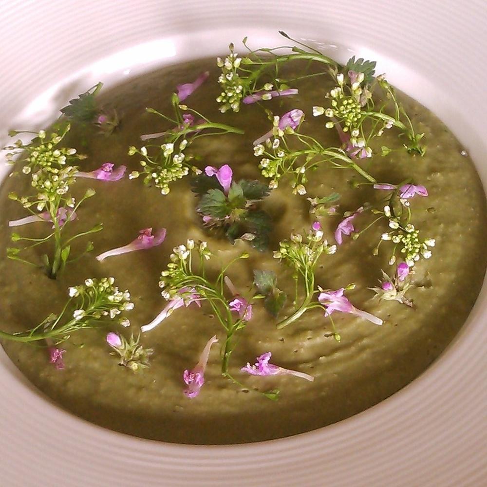 Rødtvetann og bondebønne suppe